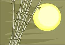 Sun bamboo and green sky Royalty Free Stock Photos