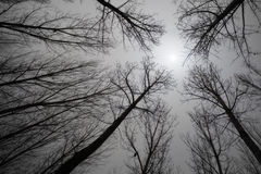 Sun through bare trees Royalty Free Stock Photo