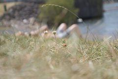 Sun bathing in cardiff bay. Sun bathing on the grass in Cardiff bay Royalty Free Stock Images
