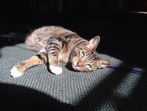 Sun bathing cat. Light happy kitten Stock Image