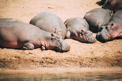 Sun bathing Royalty Free Stock Photo