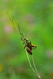 Sun bathing. A rainbow beetle enjoying the day royalty free stock photos