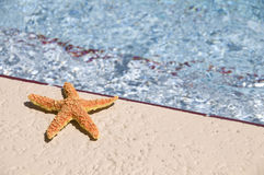 Sun bathing star fish. A colorful star fish sun bathing near a swimming pool on a bright sunny day Royalty Free Stock Image