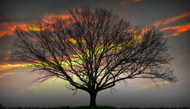 Sun-Baum in der Einstellung Sun Stockbilder