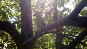 Sun, Baum, Papageienkombinationsüberraschen Stockfoto