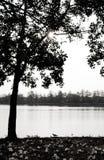 Sun-Baum und -schatten lizenzfreie stockfotos