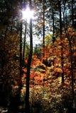 Sun beam through autumn trees. Autumn time - Sun light through trees royalty free stock photos