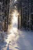 Sun beam in dark winter wood. Ray of light getting into winter dark Stock Photography