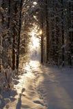 Sun beam in dark winter wood. Ray of light getting into winter dark Royalty Free Stock Images