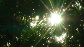 Sun beam. Ray of sun through the leaves stock video footage