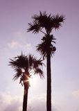 Sun beam shining with palm trees Stock Photography