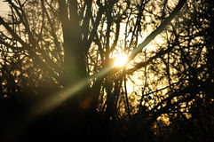 Sun beam shining through trees Stock Photos