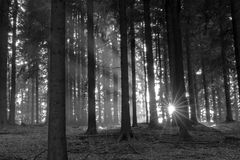 Sun beam woods. Bright sun beams in dark woods stock photography