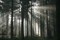 Sun beam woods Royalty Free Stock Images