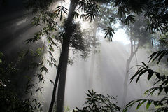 Sun beam woods. Rays of sunlight in the forest early in the morning.Thailand. national park Kaeng Krachan Stock Photos
