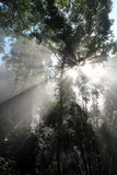 Sun beam woods. Rays of sunlight in the forest early in the morning.Thailand. national park Kaeng Krachan Royalty Free Stock Images