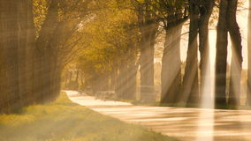 Sun beaming light trough trees. road street. traffic transportation stock video