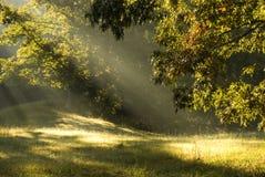 Sun beams stock image
