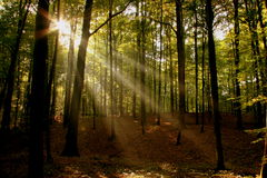 Sun beams. In the woods on a crisp and clear autumn day royalty free stock photo