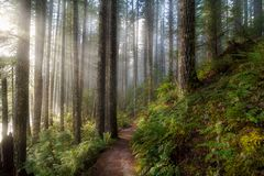 Sun Beams along Hiking Trail in Washington State Park royalty free stock photography