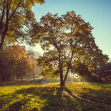Sun beams in the autumn park Royalty Free Stock Photo