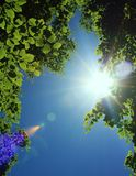 Sun beams behind tree leaves Royalty Free Stock Photo