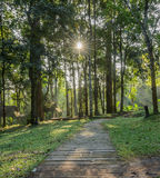Sun beams in Deciduous forest Royalty Free Stock Images