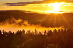 Sun beams and foggy forest Royalty Free Stock Photography