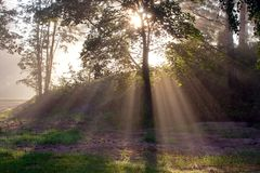 Sun beams in foggy morning Stock Photo