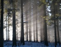 Sun beams in forest Royalty Free Stock Photography