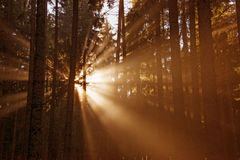 Sun beams in forest Stock Photos