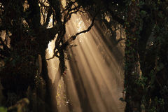 Sun beams in forest Stock Images