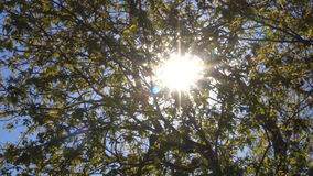 Sun Beams Glare Through Tree Branches stock video footage