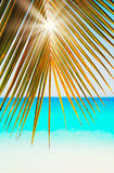Sun beams through green and gold palm leaves on blue sea white sand Seychelles background Stock Image