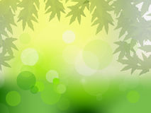 Sun beams and green leaves for vector illustration Royalty Free Stock Photography