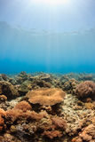 Sun beams illuminating a hard coral reef Stock Photo