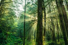 Free Sun Beams In The Forest In Ali Mountain Stock Images - 109078224