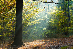 Sun beams lit glade in autumn forest Stock Photo