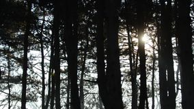 Sun beams through mist in a forest. Early morning sun beams through mist in a forest stock video footage