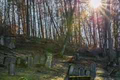 Sun beams at old Jewish cemetery with weathered tombstones, Germany.  royalty free stock image