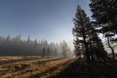 With sun beams passing through the fog at mountain forest Royalty Free Stock Photography