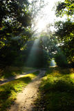 Sun beams on path in green forest Stock Photos