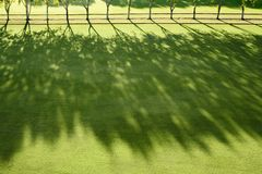 Sun beams in a polo field Stock Images