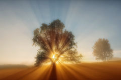 Sun beams. Sun rays breaking trhough a tree on misty morning Royalty Free Stock Photo