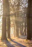 Sun beams through Rimed Trees Royalty Free Stock Photos