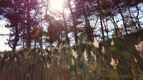 Sun beams. Shine through the trees, slow motion stock footage