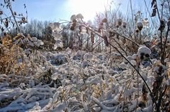 Sun beams in the snow-covered grass. In Siberia stock photography