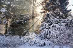 Sun beams in a snowy park Royalty Free Stock Photo