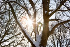 Sun beams through a snowy tree. A tree in a forest covered in snow has the sunlight glisten through its branches Royalty Free Stock Image