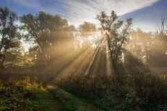 Sun beams thorough trees and greens Royalty Free Stock Photo